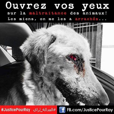 Le Maroc se mobilise pour Ray, le chien torturé 3
